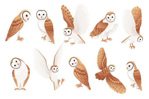 Set of cute barn owl (tyto alba) with white face and brown wings cartoon wild forest bird animal design flat vector illustration isolated on white background