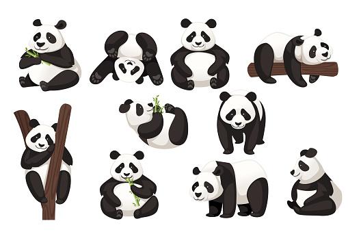 Set of cute big panda in different poses cartoon animal design flat vector illustration
