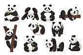 Set of cute big panda in different poses cartoon animal design flat vector illustration.