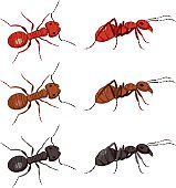 Funny cartoon ants in red, brown and black. There is atop and side view of each. Flat colors.