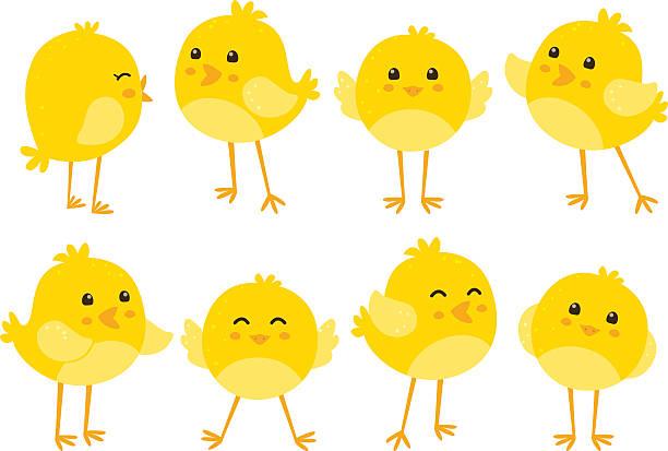 Set of cute cartoon chickens Eps10 file. chicken bird stock illustrations