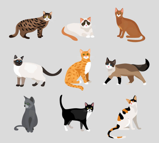 Set of cute cartoon kitties or cats vector art illustration