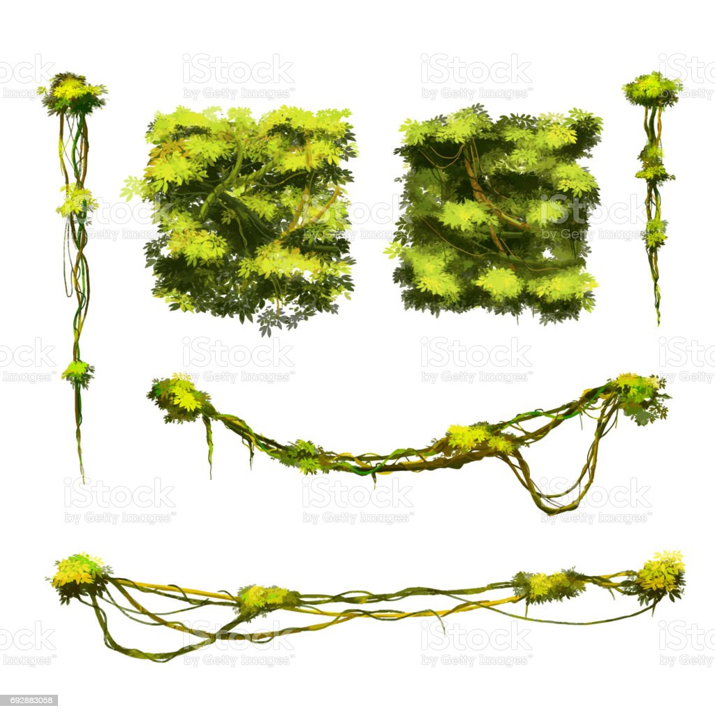 Set Of Cute Cartoon Tropical Vines And Bushes Isolated On ...