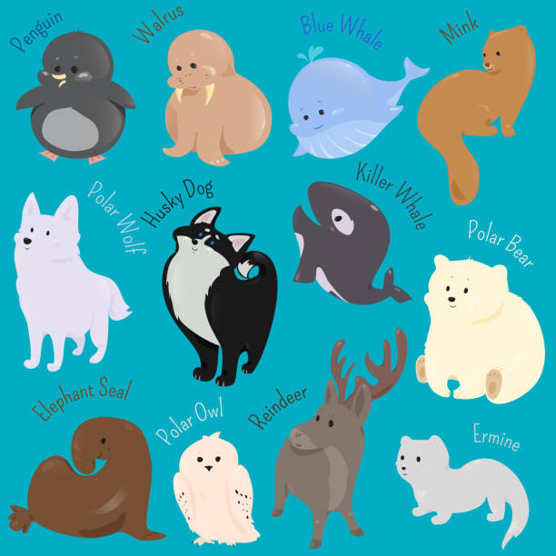 Animals with Winter Coats! - YouTube