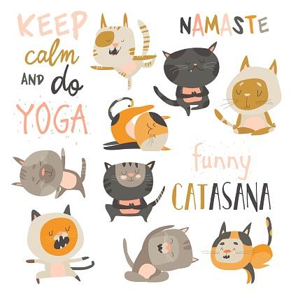 Set of cute cats in yoga asana postures