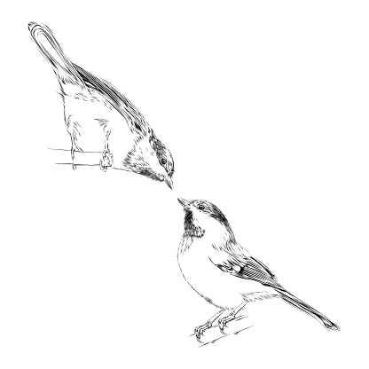 Set of Cute Chickadees in Pen and Ink. Vector EPS10 Illustration