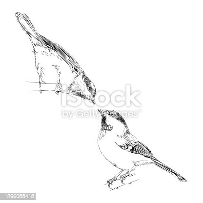istock Set of Cute Chickadees in Pen and Ink. Vector EPS10 Illustration 1296055418