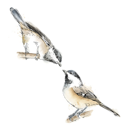Set of Cute Chickadees in Watercolor and Ink. Vector EPS10 Illustration