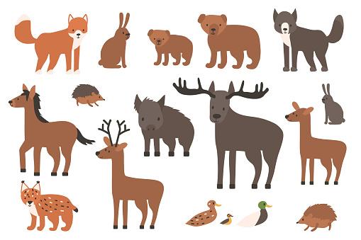 Set of cute forest animals. Cartoon isolated vector fox, wolf, bear, bear cub, elk, deer, fallow deer, hedgehog, hare, duck, duckling, lynx, horse, wild boar