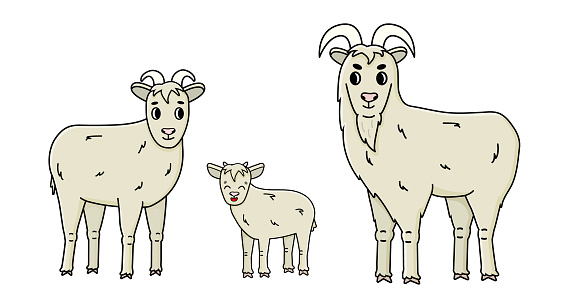 Set of cute funny vector doodle cartoon farm goat family male buck, female with horns and a baby stand sideways and look straight. Isolated fluffy hand drawn Animals are on white background, side view
