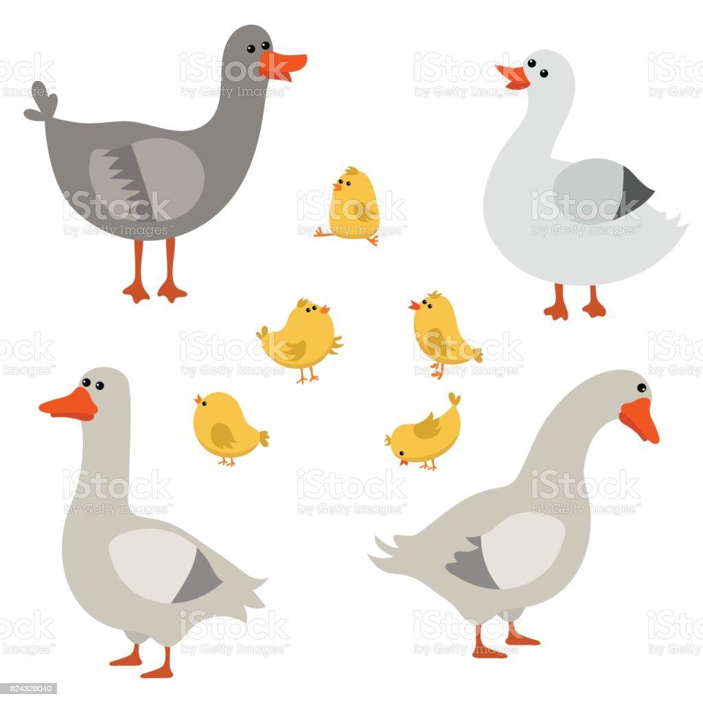 Set of cute geese vector art illustration