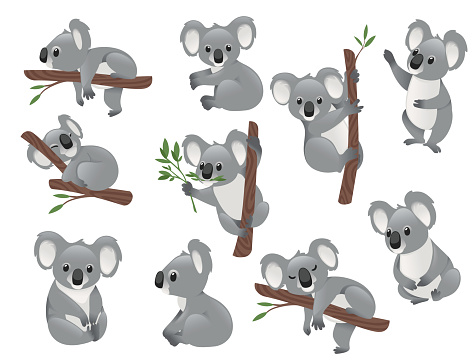 Set of cute grey koala bear in different poses eating sleeping leaves cartoon animal design flat vector illustration isolated on white background