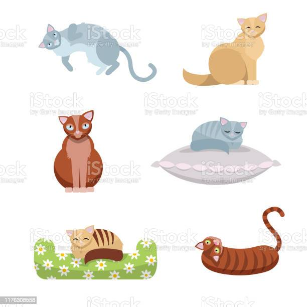 Set of cute longhaired and shorthaired cats which sit and lie on a vector id1176308558?b=1&k=6&m=1176308558&s=612x612&h=wk3f1fqubrefomwoptald6mtlllmsozptdeaked7sa0=