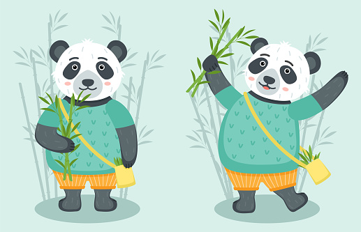 Set of cute pandas with bamboo, vector illustration