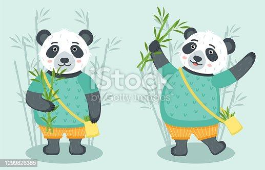 Conjunto de pandas lindos con bambú, ilustración vectorial