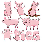 Set of cute pigs on a white background.