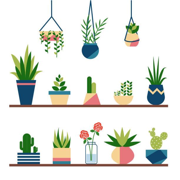 stockillustraties, clipart, cartoons en iconen met verzameling van leuke planten in potten - kamerplant