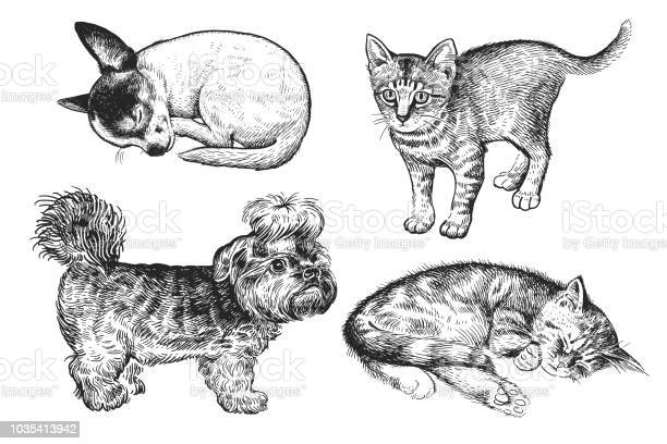 Set of cute puppies and kittens handmade black and white drawing of vector id1035413942?b=1&k=6&m=1035413942&s=612x612&h=dtegkmrr  jzaybcwuwmgm5x69zwxisbsvltp8skbvk=