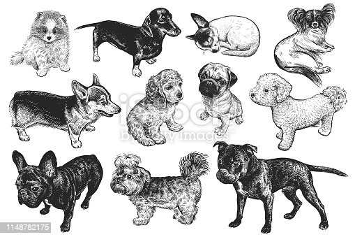 Dogs set. Cute puppies of terrier, Spaniel, Bichon Frise, Corgi, Yorkshire, Dachshund, Spitz, Chi Hua Hua and Pug. Pets isolated. Realistic sketch of animals. Vintage engraving. Black and white.