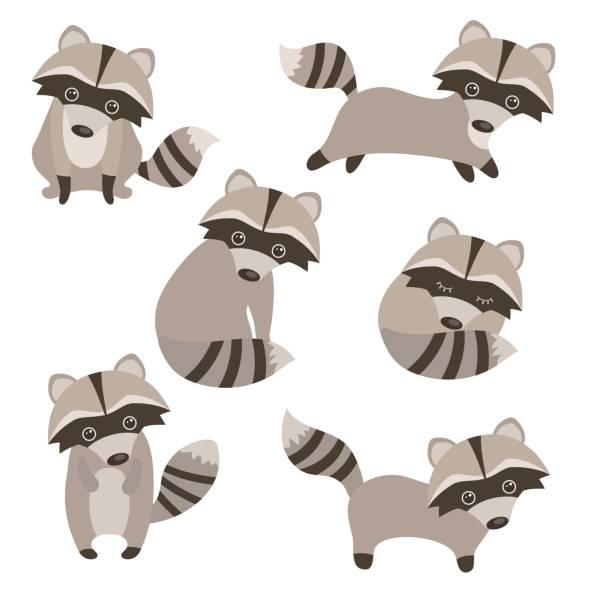 set of cute raccoons - raccoon stock illustrations