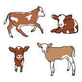 Set of cute spotted calf. Little cow runs, sniffs, walks, lies. Vector decor element for kids t-shirt design. Isolated animals on the white background.