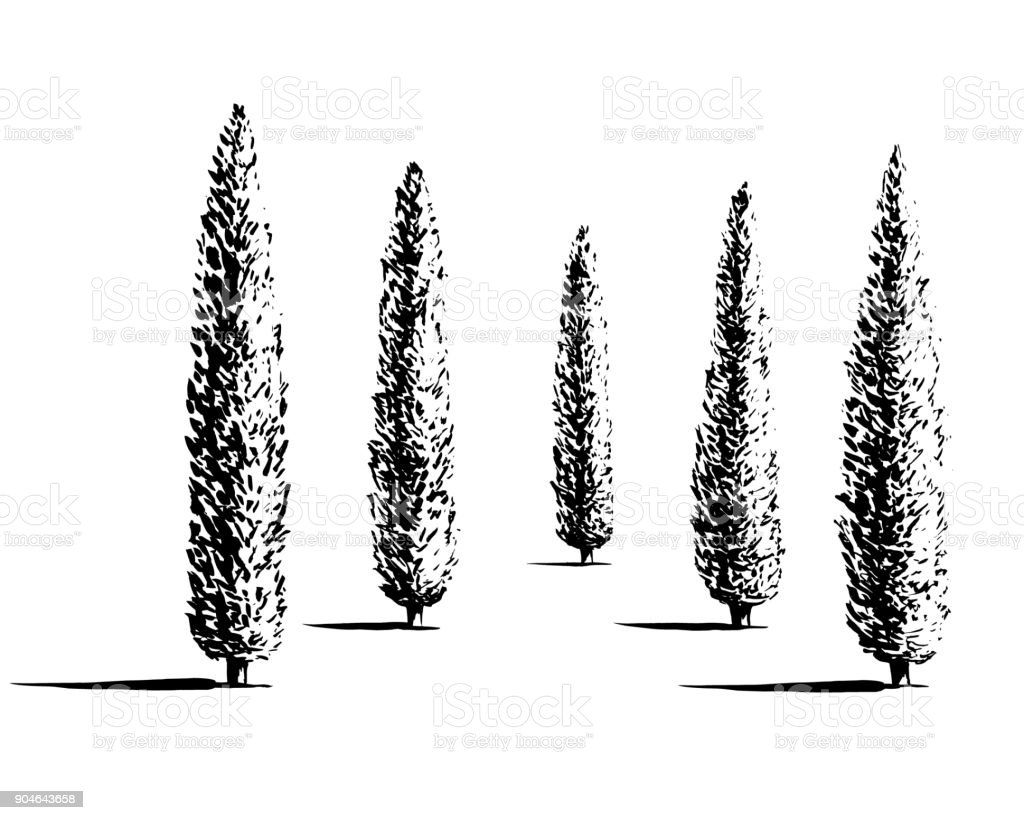 Set of cypresses illustration vector art illustration