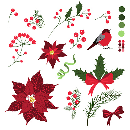 Set of decorative elements for Christmas holiday cards with flowers and berries. Vector Illustration, isolated on white.