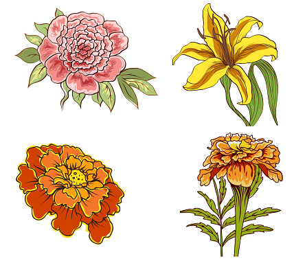 set of decorative flowers isolated on white background for design