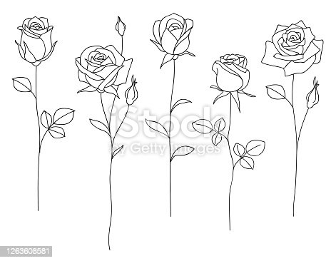 Set of decorative hand drawn roses isolated on white. Flower icon.