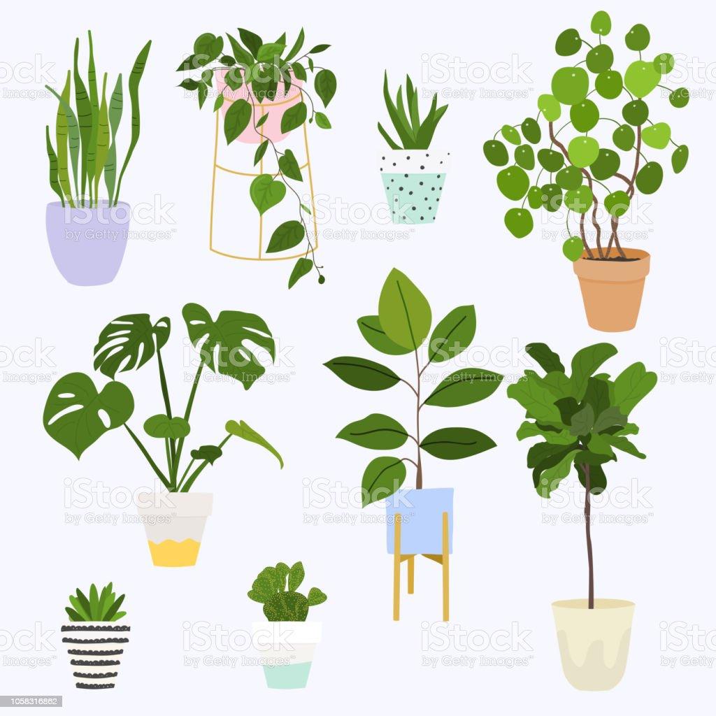 Reihe Von Dekorativen Zimmerpflanzen Blumentopf Isolierte Objekte Zimmerpflanze Flower Pot Kollektion Stock Vektor Art Und Mehr Bilder Von Aloe Istock