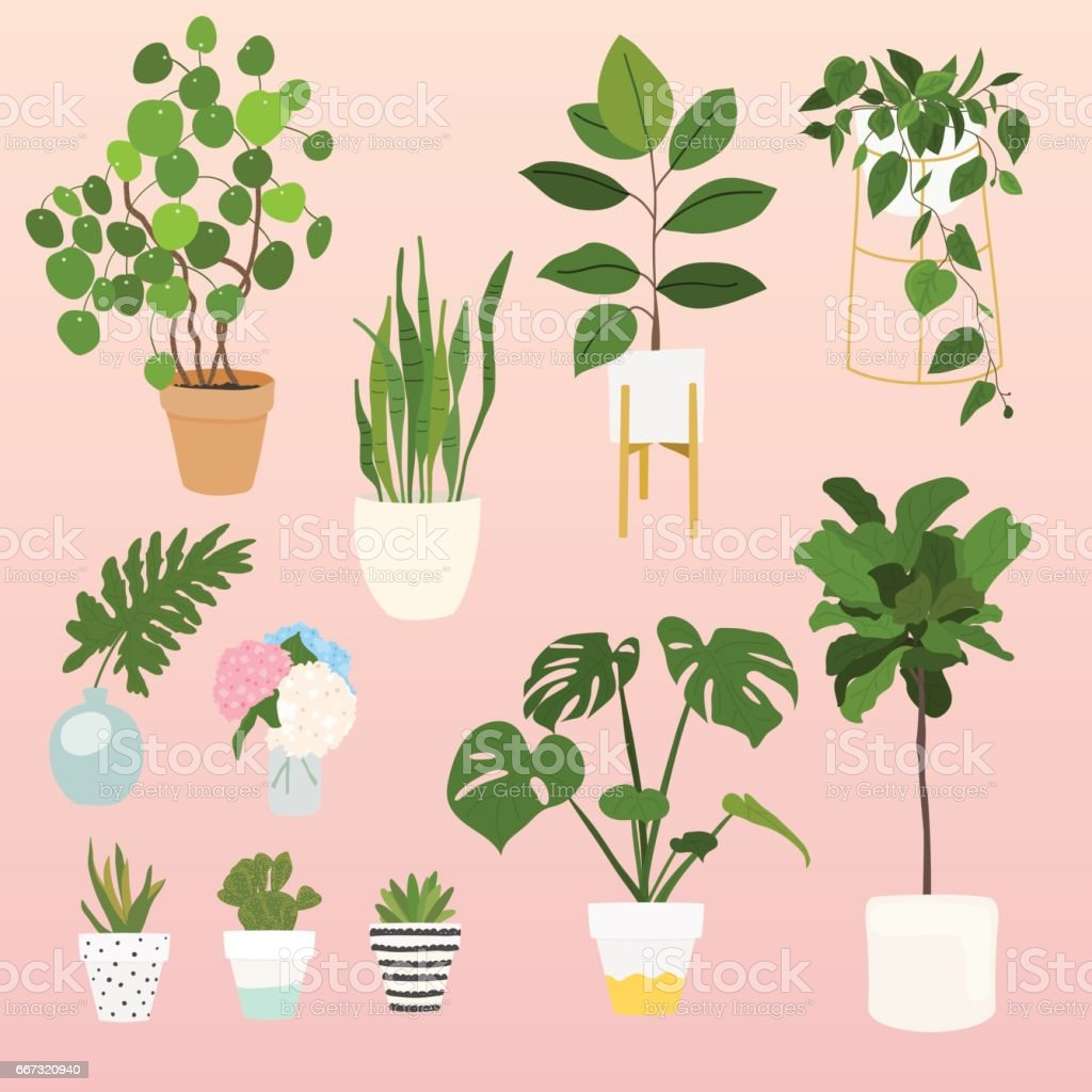 Set of decorative house plants. vector art illustration