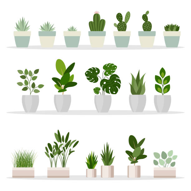 Set of decorative houseplants. Plants and nature homemade flowers in pot interior decoration in flat cartoon style. Vector illustration Set of decorative houseplants. Plants and nature homemade flowers in pot interior decoration in flat cartoon style. Vector illustration potted plant stock illustrations
