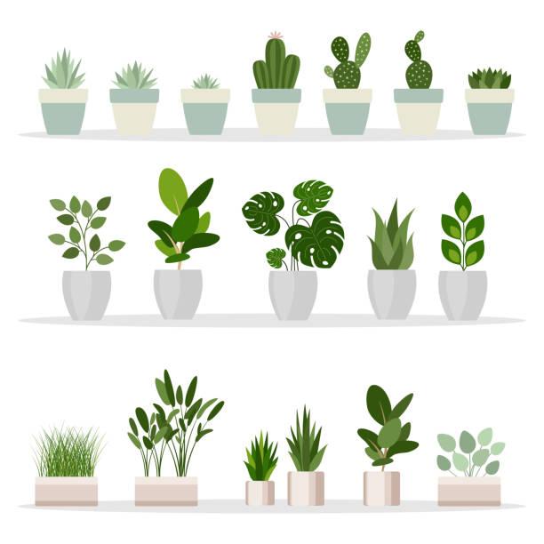 stockillustraties, clipart, cartoons en iconen met het aantal decoratieve kamerplanten. planten en natuur zelfgemaakte bloemen in pot interieur in platte cartoon stijl. vectorillustratie - kamerplant