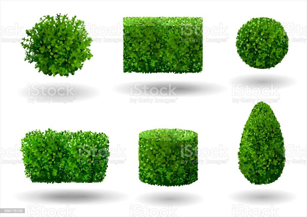 Set of decorative plants - illustrazione arte vettoriale