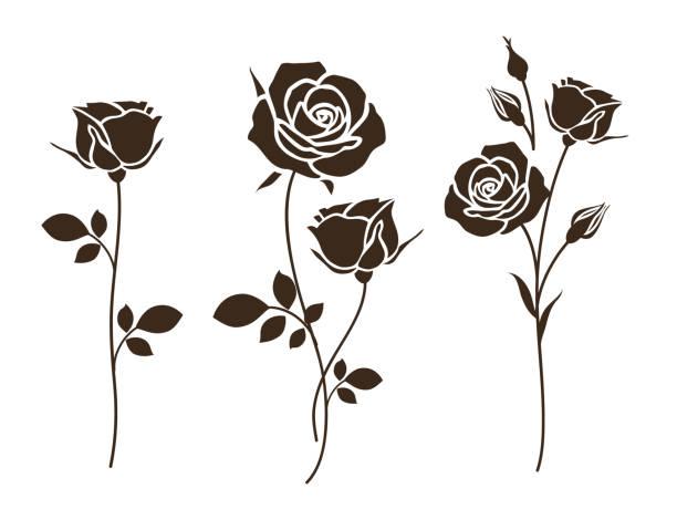 satz von dekorativen rose mit blättern. blume silhoutte. - rose stock-grafiken, -clipart, -cartoons und -symbole