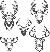 set of deer heads isolated on white background. Design elements