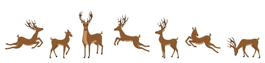 Set of Deers Isolated. Sika Deers, Reindeers, Stags