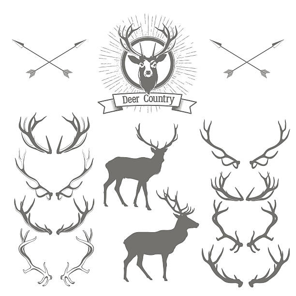 set of deers  silhouette, deer head and antlers - deer antlers stock illustrations, clip art, cartoons, & icons
