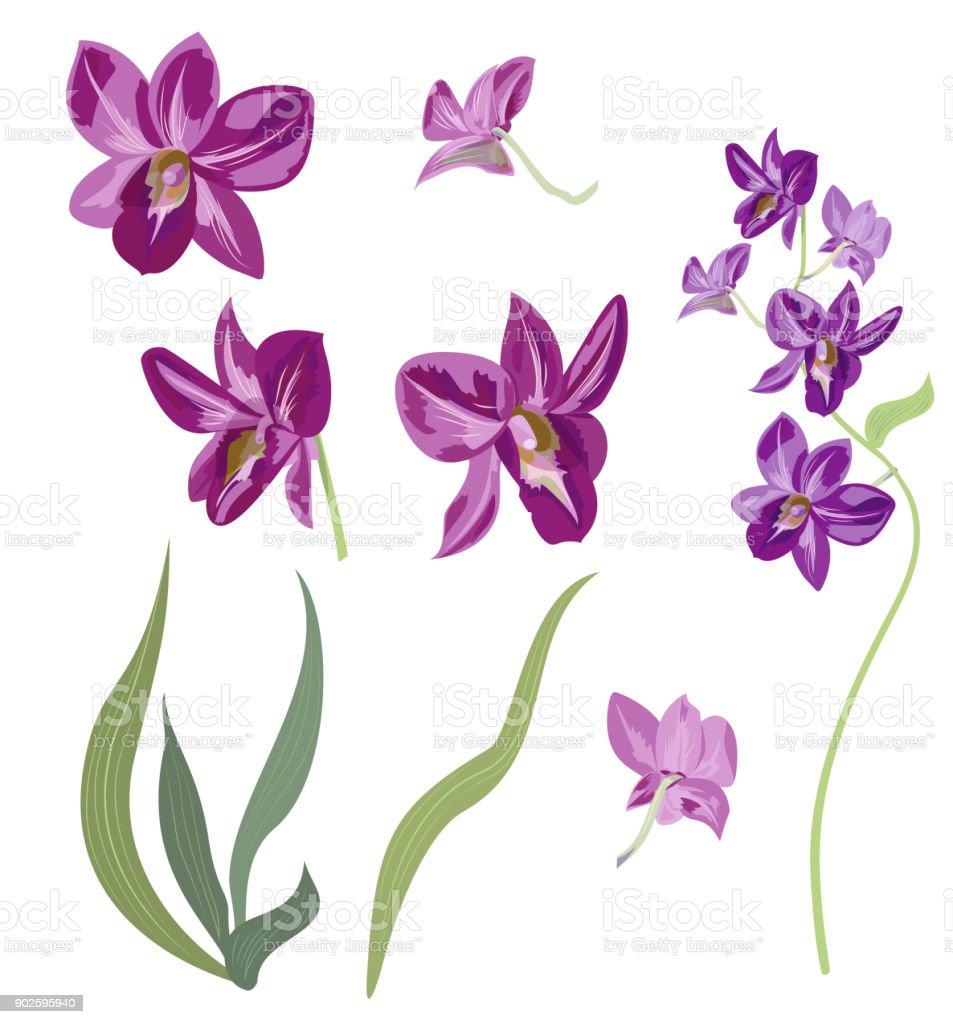 Set Of Dendrobium Phalaenopsis Orchid Collection Purple Flowers