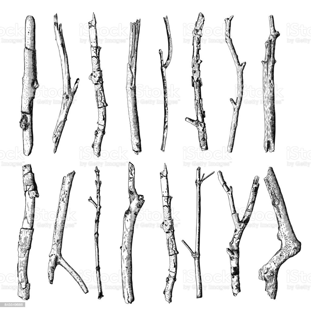 Set of detailed and precise ink drawing of wood twigs, forest collection, natural tree branches, sticks, hand drawn driftwoods forest pickups bundle. Rustic design, classic drawing elements. Vector. vector art illustration