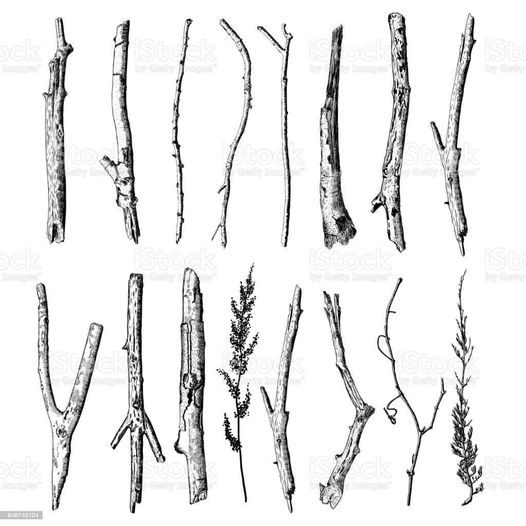 Set of detailed and precise ink drawing of wood twigs, forest collection, natural tree branches, sticks, hand drawn driftwoods forest pickups bundle. Rustic design, classic drawing elements. Vector. royalty-free set of detailed and precise ink drawing of wood twigs forest collection natural tree branches sticks hand drawn driftwoods forest pickups bundle rustic design classic drawing elements vector stock illustration - download image now