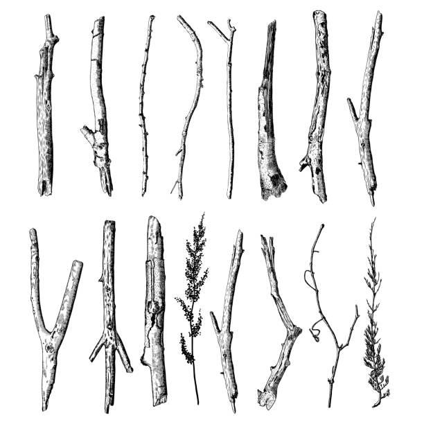 zestaw szczegółowego i precyzyjnego rysunku atramentu z gałązek drewna, kolekcji lasów, naturalnych gałęzi drzew, patyków, ręcznie rysowanych driftwoods lasu pickupy pakiet. rustykalny design, klasyczne elementy rysunkowe. wektor. - gałązka stock illustrations