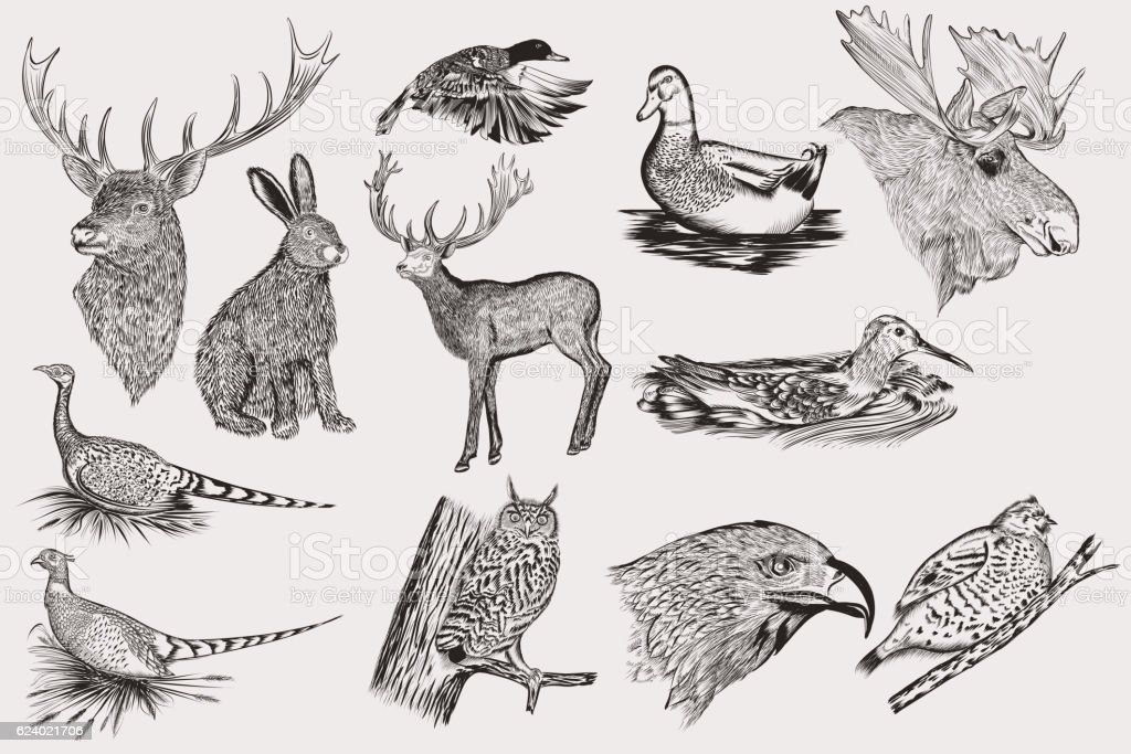 Set of detailed hand drawn animals - ilustração de arte em vetor