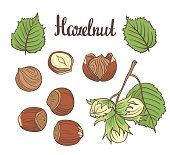 Set of detailed hand drawn hazelnuts isolated on white background.