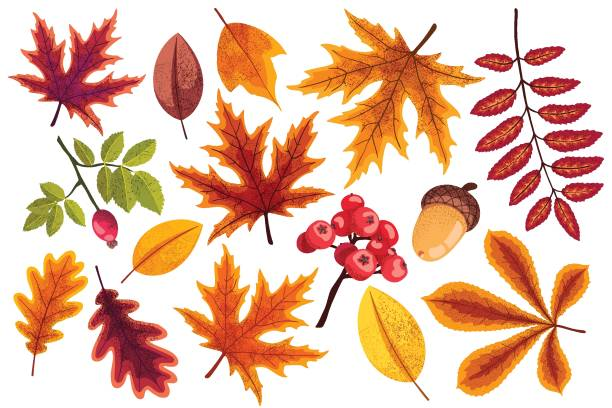 Set of different autumn leaves in warm colors Set of different autumn leaves in warm colors, isolated and grouped vector elements. fall leaves stock illustrations