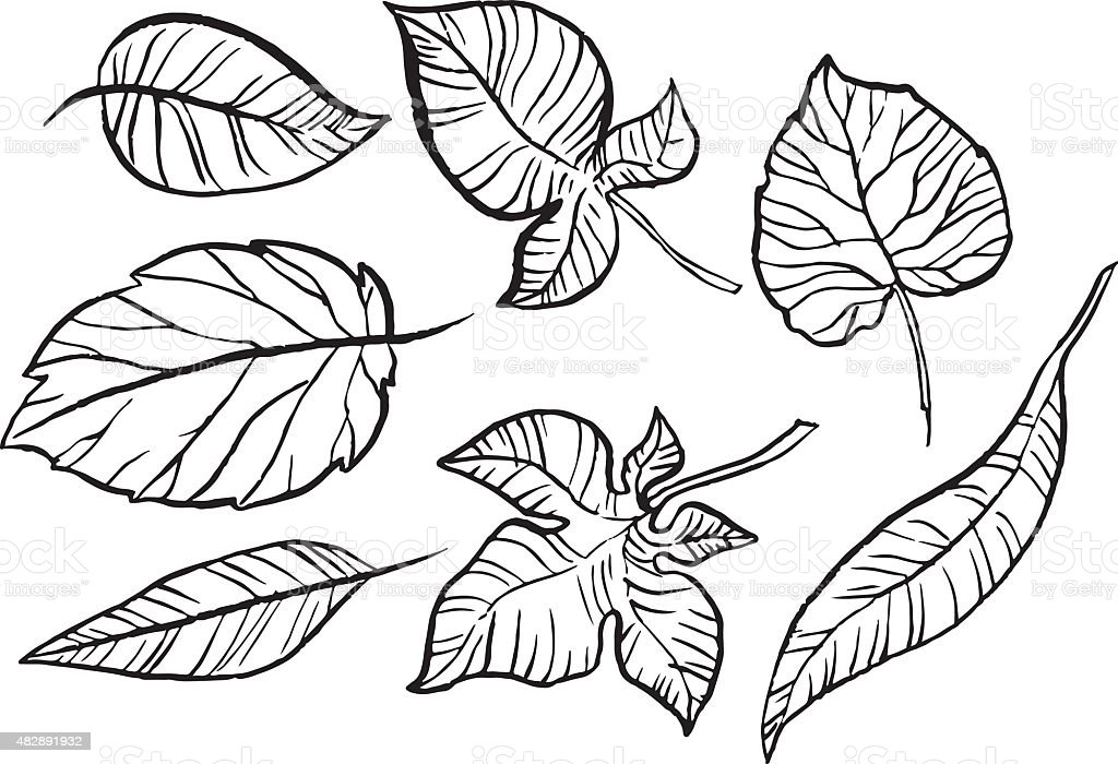 set of different autumn leaves vector art illustration