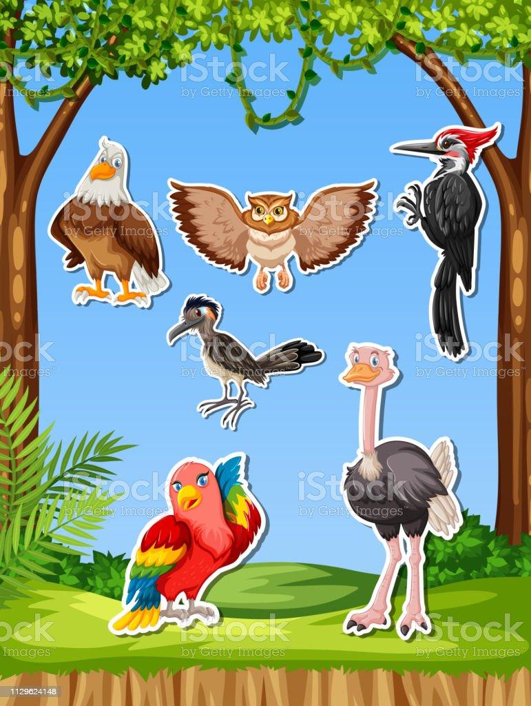 Conjunto de diferentes bird adesivo - ilustração de arte em vetor