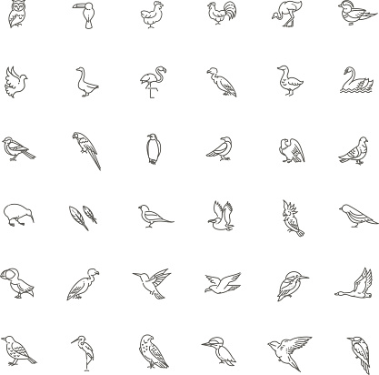 Set of different birds