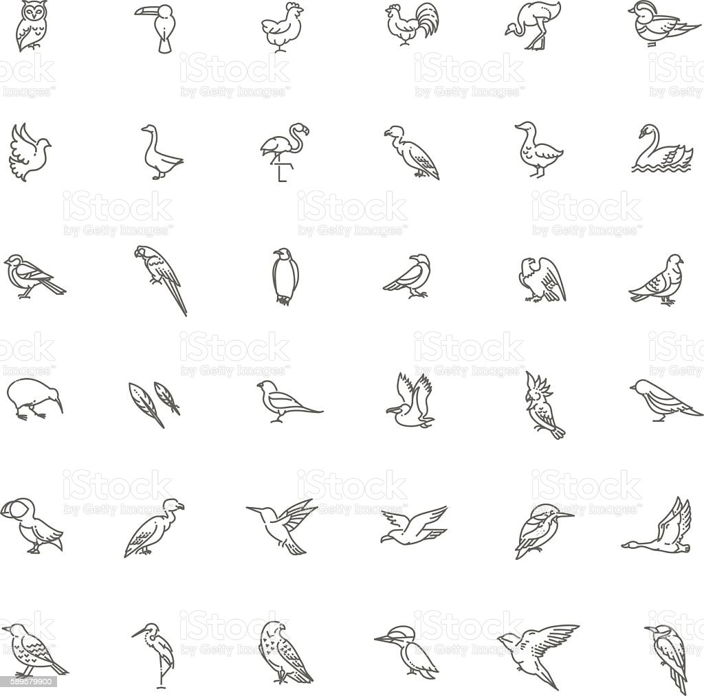 Set of different birds vector art illustration