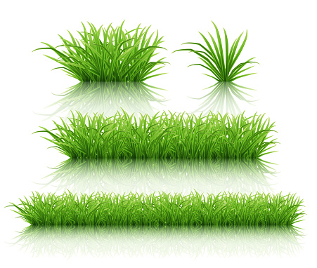 Set of different bushes of green grass on a white reflective surface. Highly realistic illustration.